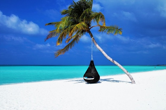 Calm beach with single palm tree suspending an enclosed cloth pod-like chair on a gorgeous day.