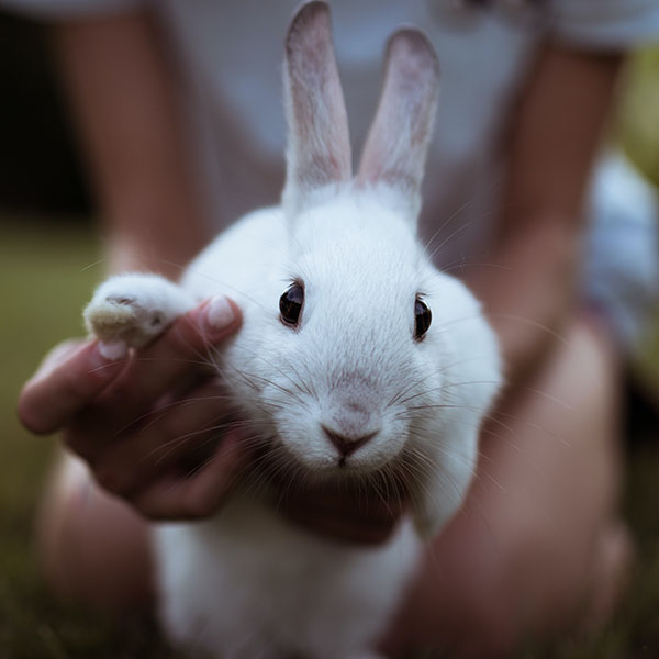 A baby rabbit in someone's hands.